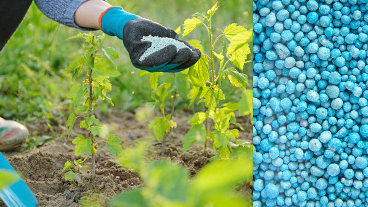 تمدید مهلت ثبتنام  چالشهای نوآوری در مصارف کشاورزی تا ۲ شهریورماه سال جاری