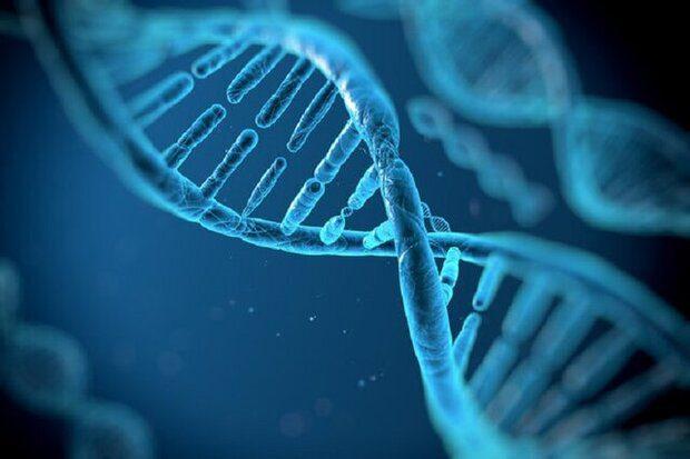 سلولهای نوترکیب «ایرانساخت» به کمک صنعت ژنتیک آمد