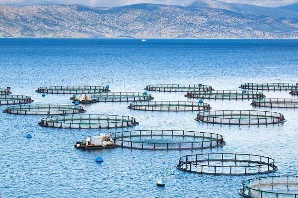تولید بومی تجهیزات قفس پرورش ماهی توسط دانشبنیانها