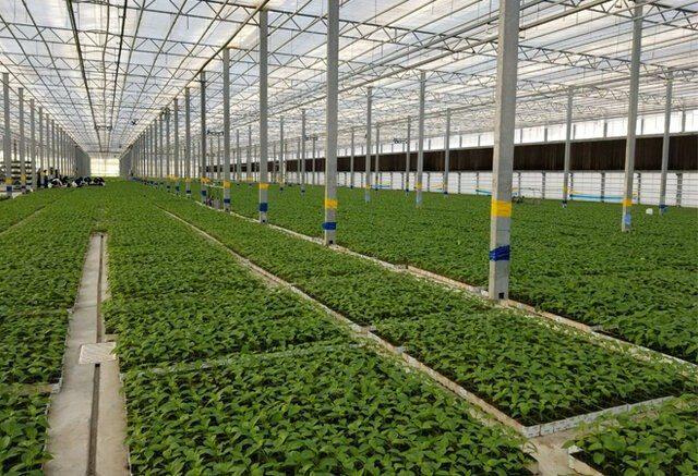 افزایش تولید داخلی نهادههای گلخانهای با فناوران بومی