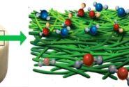ساخت فیلتری گیاهی که میتواند آلایندههای خودروها را جذب کند